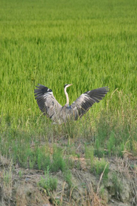 鳥 039.jpg