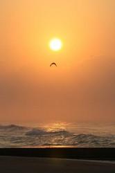 鳥と日の出.jpg