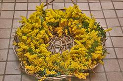 黄色-020.jpg