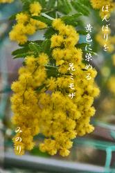 黄色-067~ミモザ.jpg