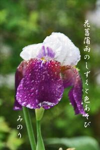 syoubu--114.jpg