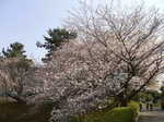 押し花展と浜松城、大沼池 270.jpg