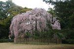 京都 069.jpg