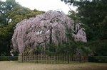 京都 070.jpg