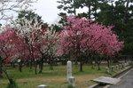 京都 089.jpg