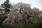 京都 109.jpg