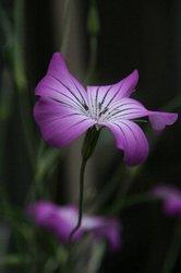 庭の花 967.jpg