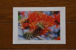 庭の花 989.jpg