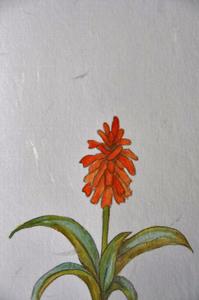 アロエの花-014.jpg