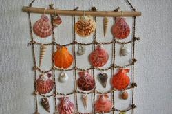 貝殻.jpg