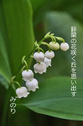 鈴蘭 俳句.jpg