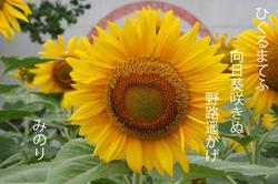 黄色い.jpg
