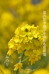 黄色い〜.jpg